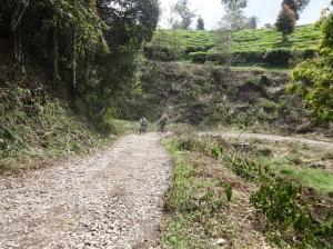 salah satu track menuju gunung tilu